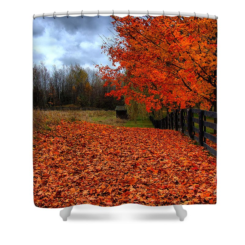 Autumn Shower Curtain featuring the photograph Autumn Leaves by Joe Ng