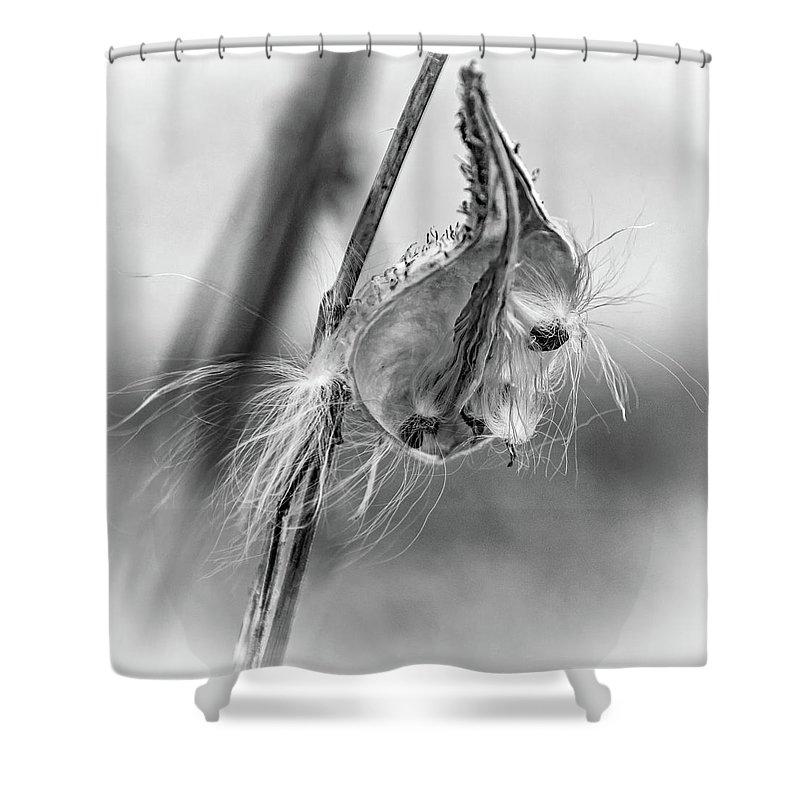 Steve Harrington Shower Curtain featuring the photograph Autumn Milkweed 9 - Bw by Steve Harrington