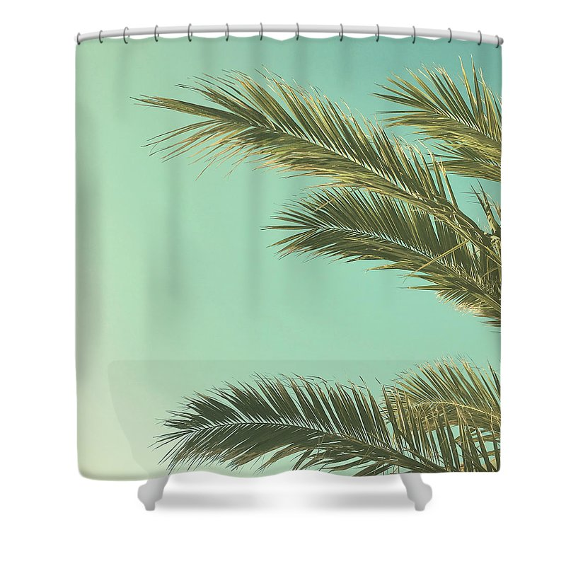 Palm Trees Shower Curtain featuring the photograph Autumn Palms II by Cassia Beck