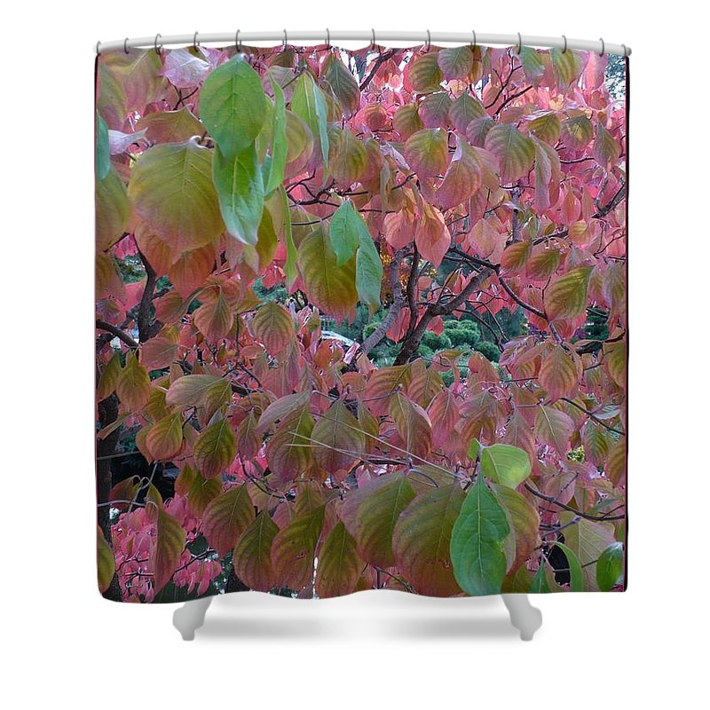 Fall Shower Curtain featuring the photograph Autumn Pink Poster by Carol Groenen