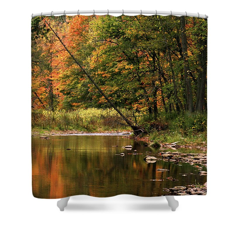 Tree Shower Curtain featuring the photograph Autumn Reflections by Phill Doherty