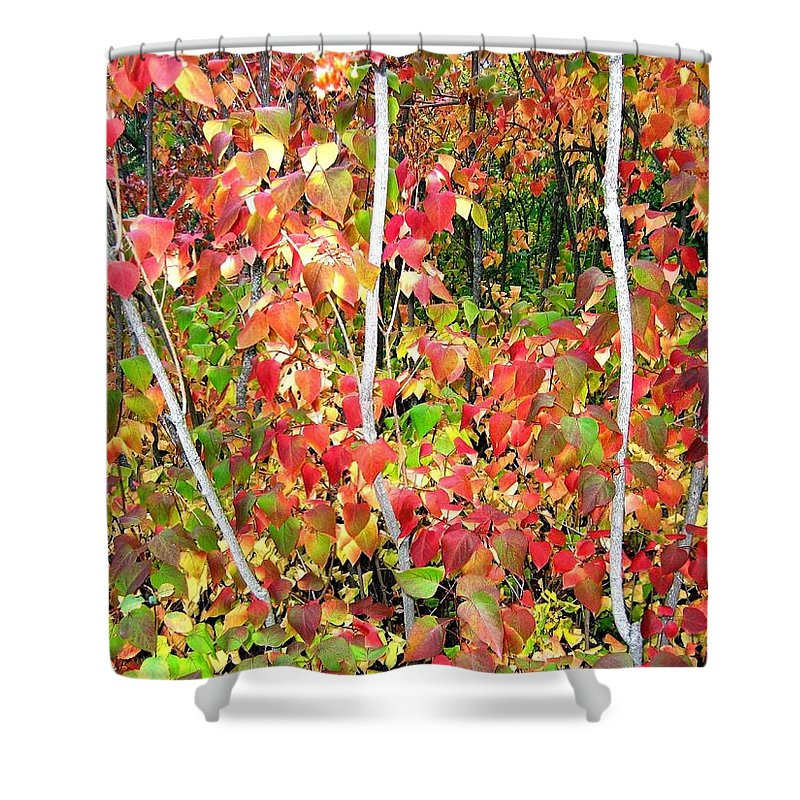 Autumn Shower Curtain featuring the photograph Autumn Sanctuary by Will Borden