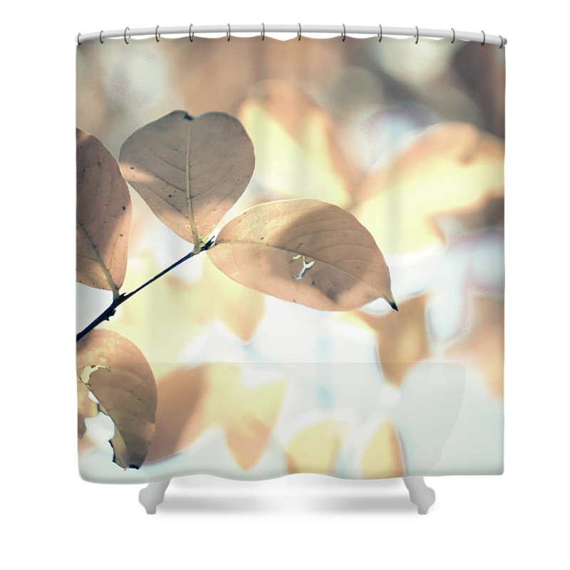 Group Shower Curtain featuring the photograph Autumn Season Leaves On A Tree In Sun Light by Alex Grichenko