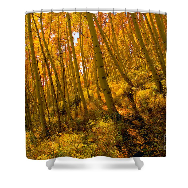 Autumn Shower Curtain featuring the photograph Autumn Trail by David Lee Thompson