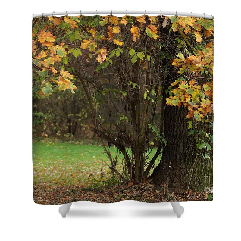 Prott Shower Curtain featuring the photograph Autumn Tree 2 by Rudi Prott
