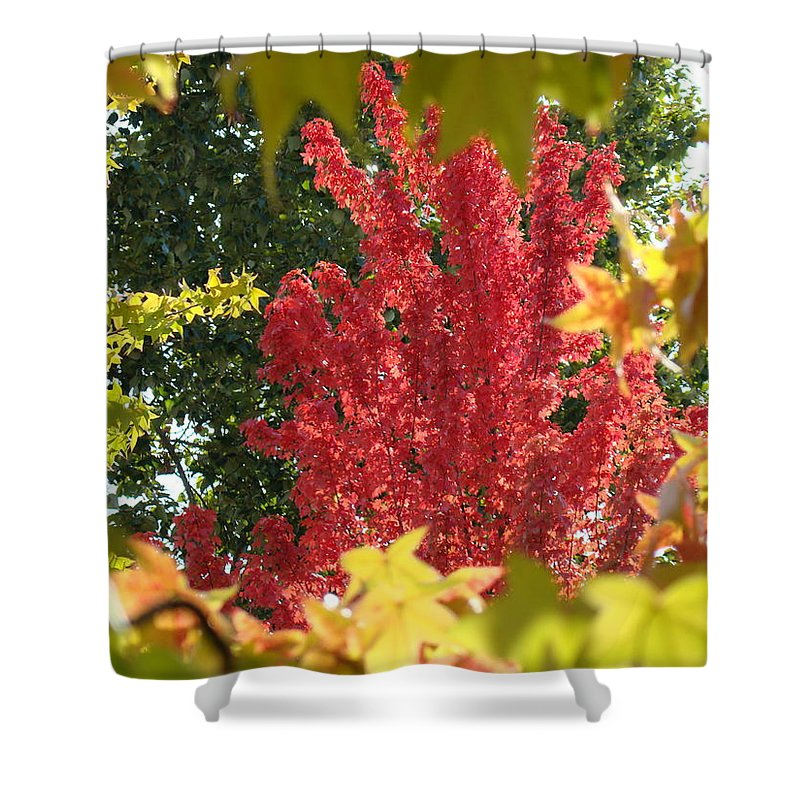 Autumn Shower Curtain featuring the photograph Autumn Trees Landscape Art Prints Canvas Fall Leaves Baslee Troutman by Baslee Troutman