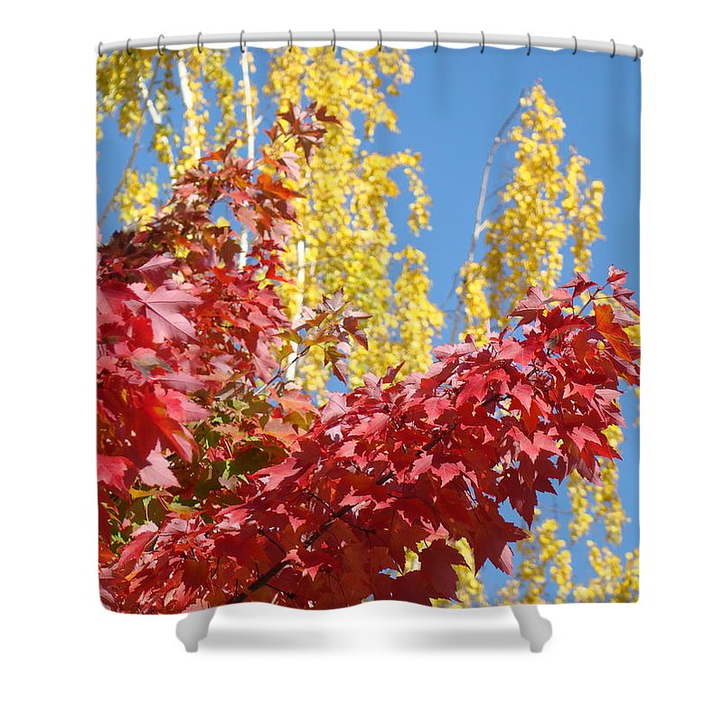 Autumn Shower Curtain featuring the photograph Autumn Trees Red Yellow Fall Tree Blue Sky Landsape by Baslee Troutman