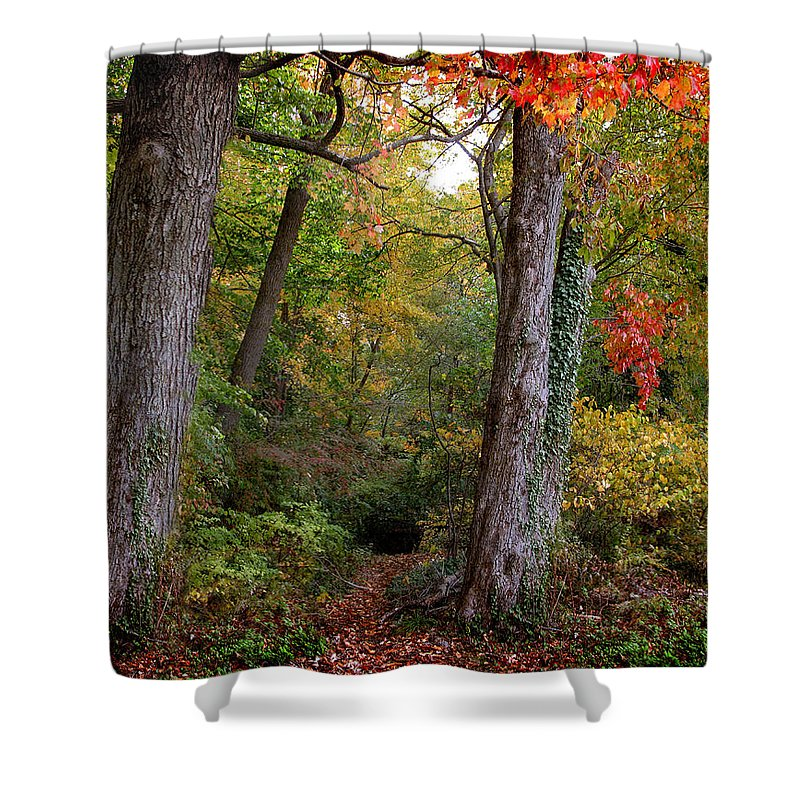 Nature Shower Curtain featuring the photograph Autumn Woodland by Jessica Jenney