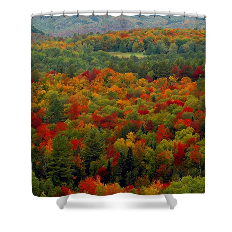 Autumn Shower Curtain featuring the painting Autumns Colors by David Lee Thompson