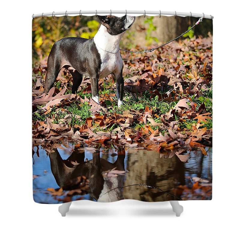 Animal Shower Curtain featuring the photograph Autumn's Reflection by Susan Herber