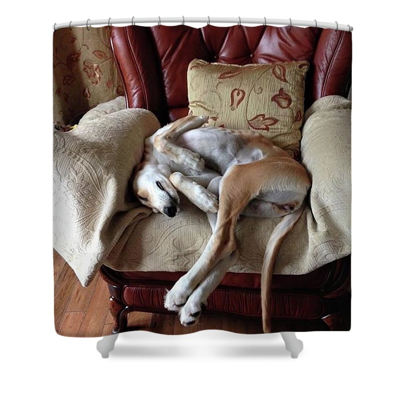 Persiangreyhound Shower Curtain featuring the photograph Ava - Asleep On Her Favourite Chair by John Edwards