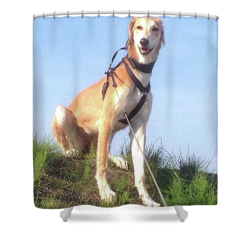 Salukilove Shower Curtain featuring the photograph Ava-grace, Princess Of Arabia  #saluki by John Edwards