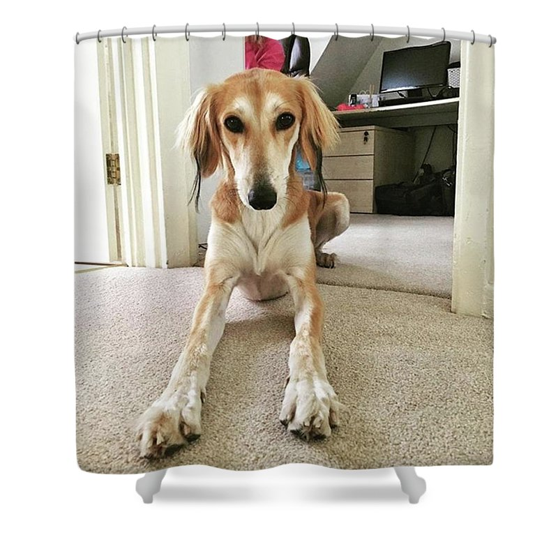 Persiangreyhound Shower Curtain featuring the photograph Ava On Her First Birthday #saluki by John Edwards