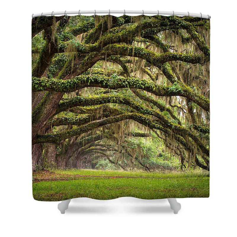 Charleston Sc Shower Curtain featuring the photograph Avenue of Oaks - Charleston SC Plantation Live Oak Trees Forest Landscape by Dave Allen