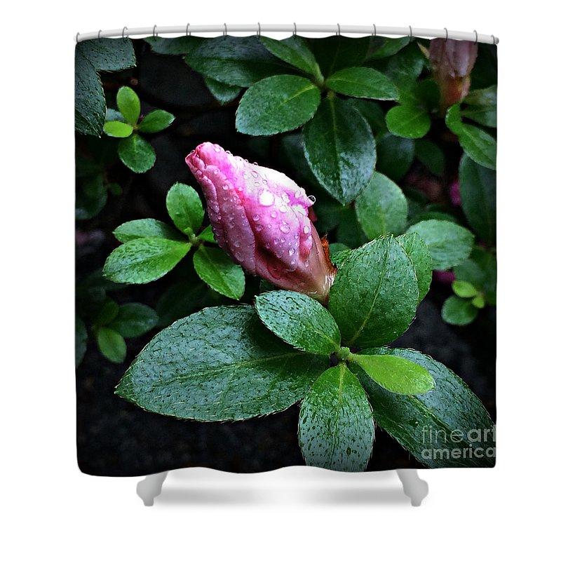 Flower Shower Curtain featuring the photograph Awakening - Flower Bud In The Rain by Miriam Danar