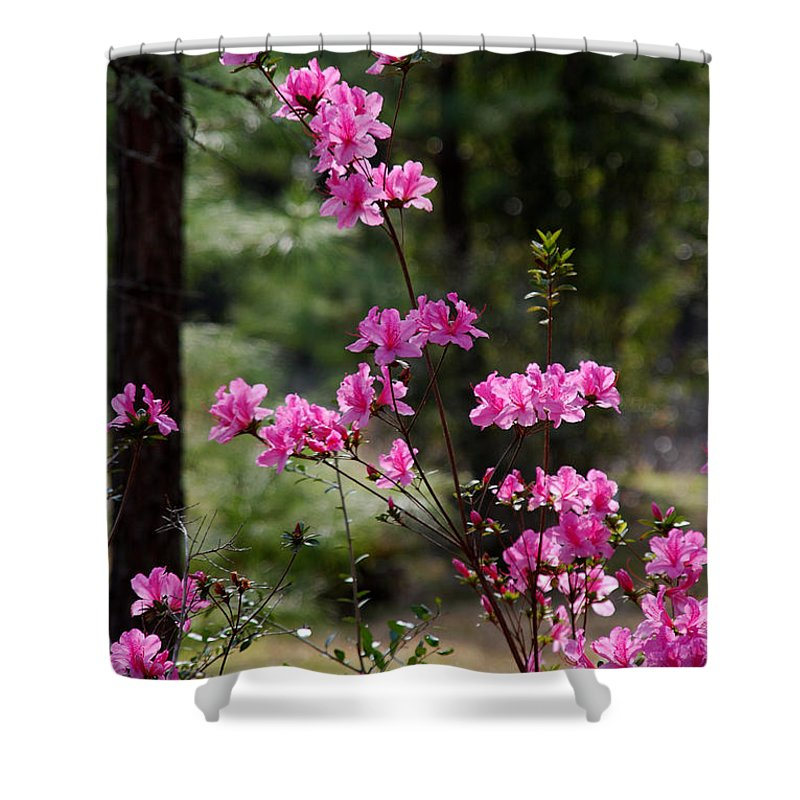 Spring Flower Shower Curtain featuring the photograph Azaleas II by Susanne Van Hulst
