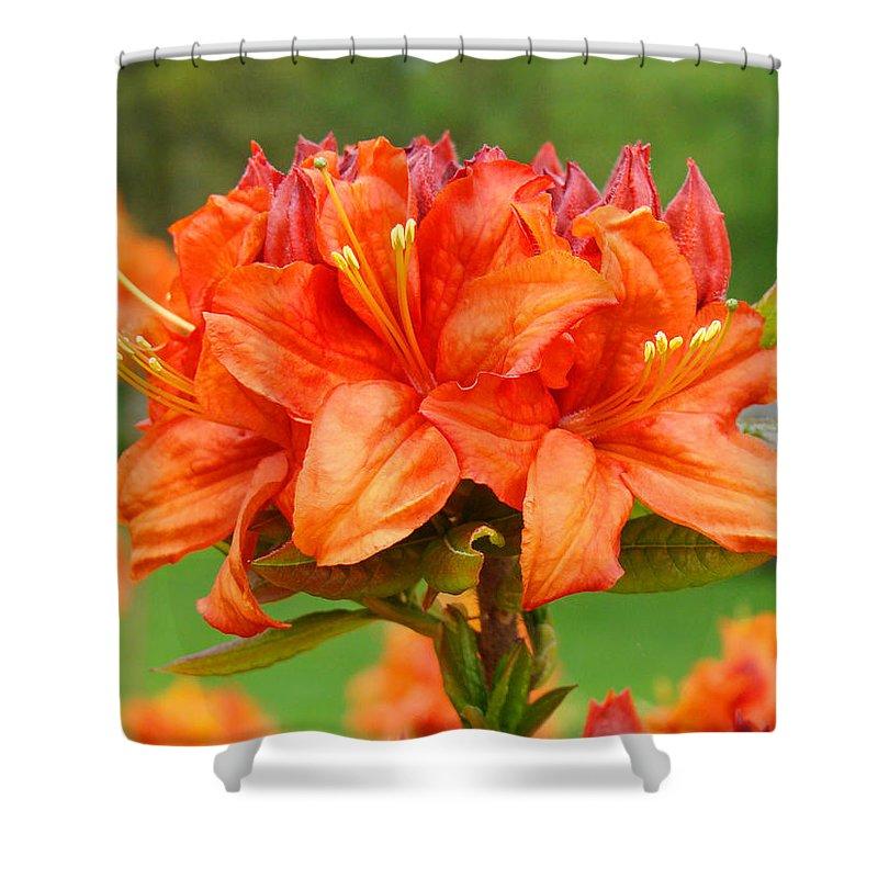 �azaleas Artwork� Shower Curtain featuring the photograph Azaleas Orange Red Azalea Flowers 11 Botanical Giclee Art Baslee Troutman by Baslee Troutman