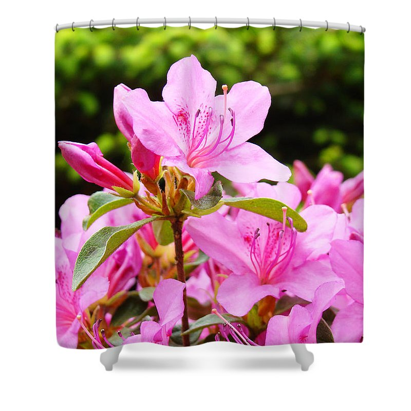 �azaleas Artwork� Shower Curtain featuring the photograph Azaleas Pink Azalea Flowers Artwork 12 Landscape Art Prints by Baslee Troutman