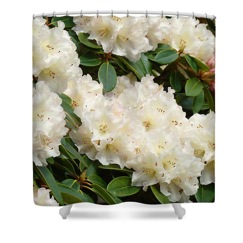 �azaleas Artwork� Shower Curtain featuring the photograph Azaleas Rhodies Landscape White Pink Rhododendrum Flowers 8 Giclee Art Prints Baslee Troutman by Baslee Troutman
