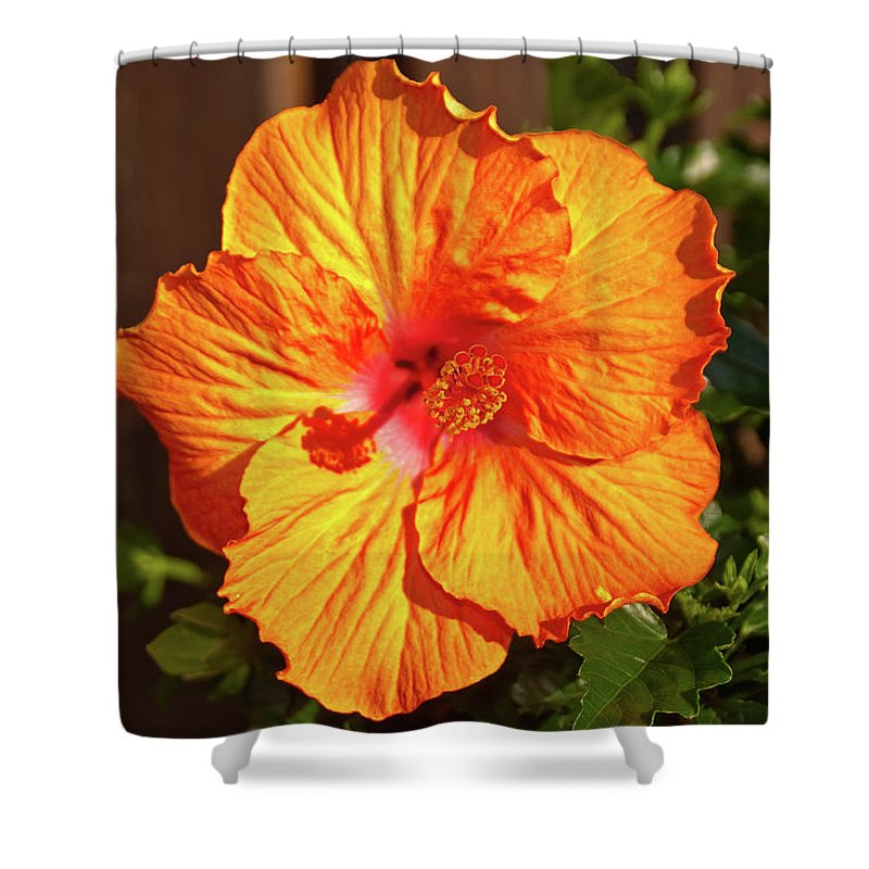 Flowers Shower Curtain featuring the photograph B Glavin Garden 11604 by Guy Whiteley