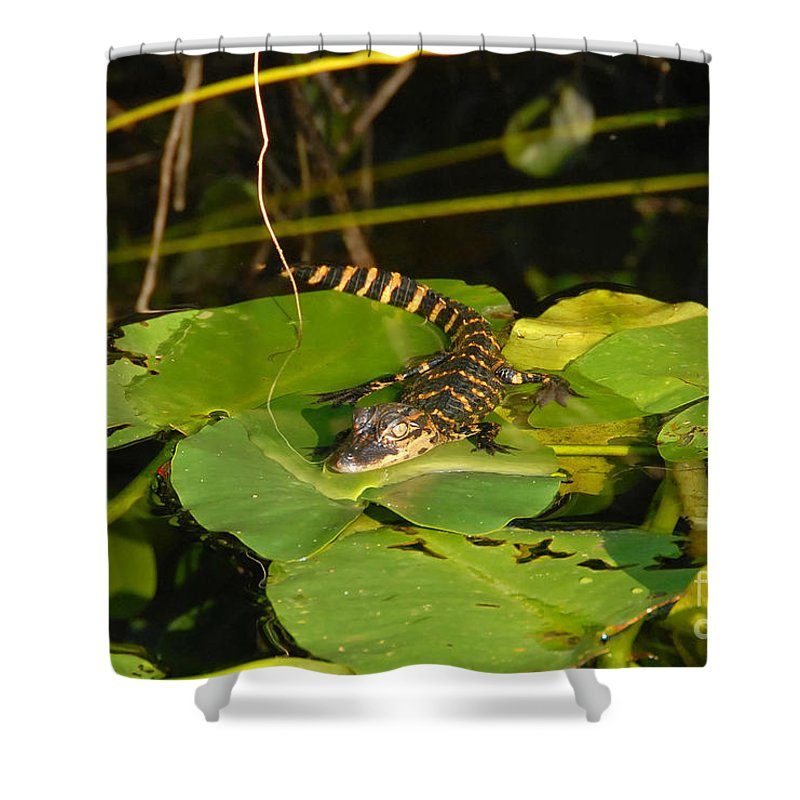 Baby Shower Curtain featuring the photograph Baby Alligator by David Lee Thompson