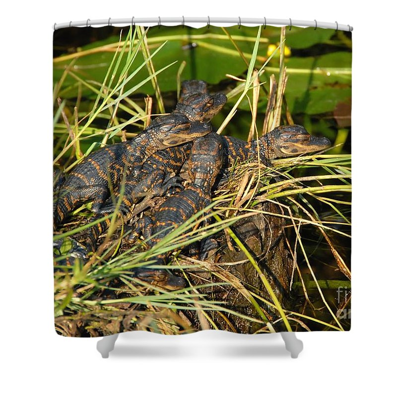 Alligators Shower Curtain featuring the photograph Baby Alligators by David Lee Thompson