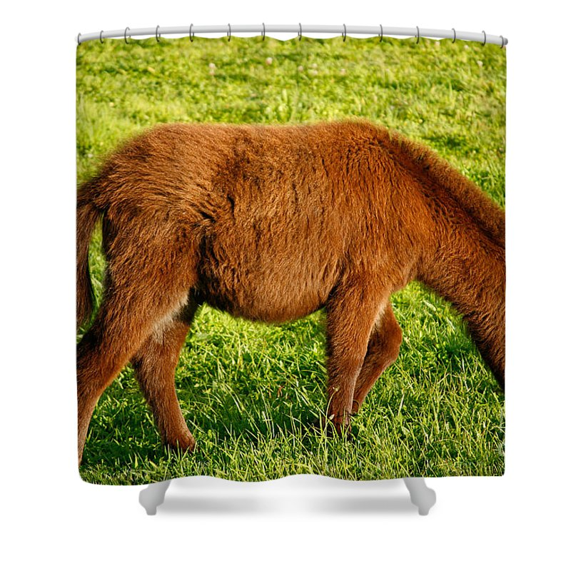 Animals Shower Curtain featuring the photograph Baby Donkey by Gaspar Avila