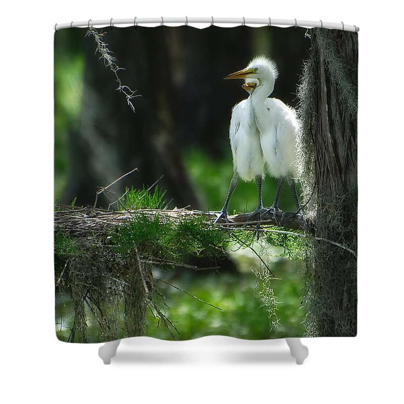 Egret Shower Curtain featuring the photograph Baby Great Egrets With Nest by Rich Leighton