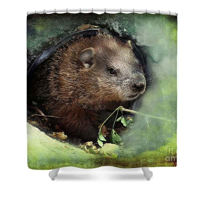 Animal Shower Curtain featuring the photograph Baby Groundhog by Elaine Manley