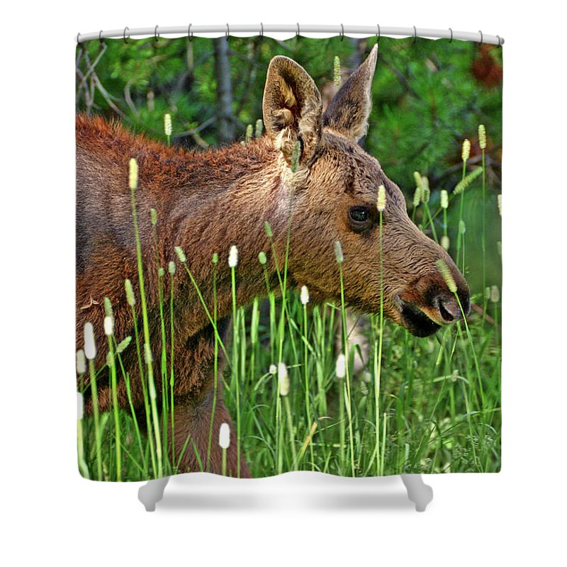 Moose Shower Curtain featuring the photograph Baby Moose by Scott Mahon