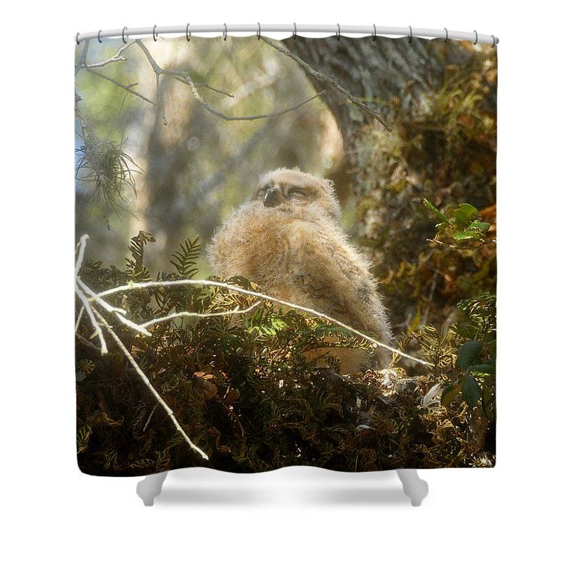 Great Horned Owl Shower Curtain featuring the photograph Baby owl sleeping by David Lee Thompson