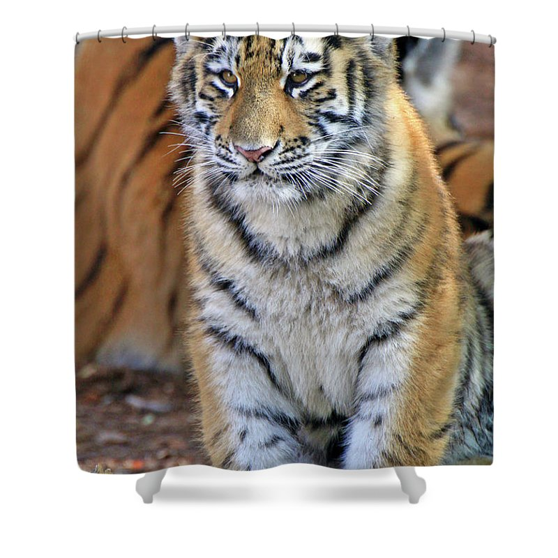 Tiger Shower Curtain featuring the photograph Baby Stripes by Scott Mahon
