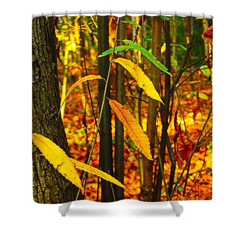 Landscape Shower Curtain featuring the photograph Baby Tree Foliage by Loretta S