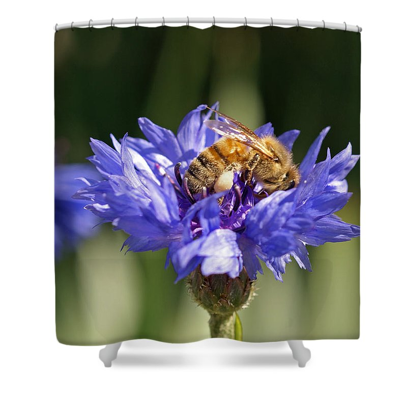Bee. Flower Shower Curtain featuring the photograph Bachelor Button And Bee by Heather Coen