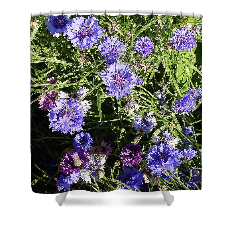 Flower Shower Curtain featuring the photograph Bachelor Buttons-1 by Shirley Heyn