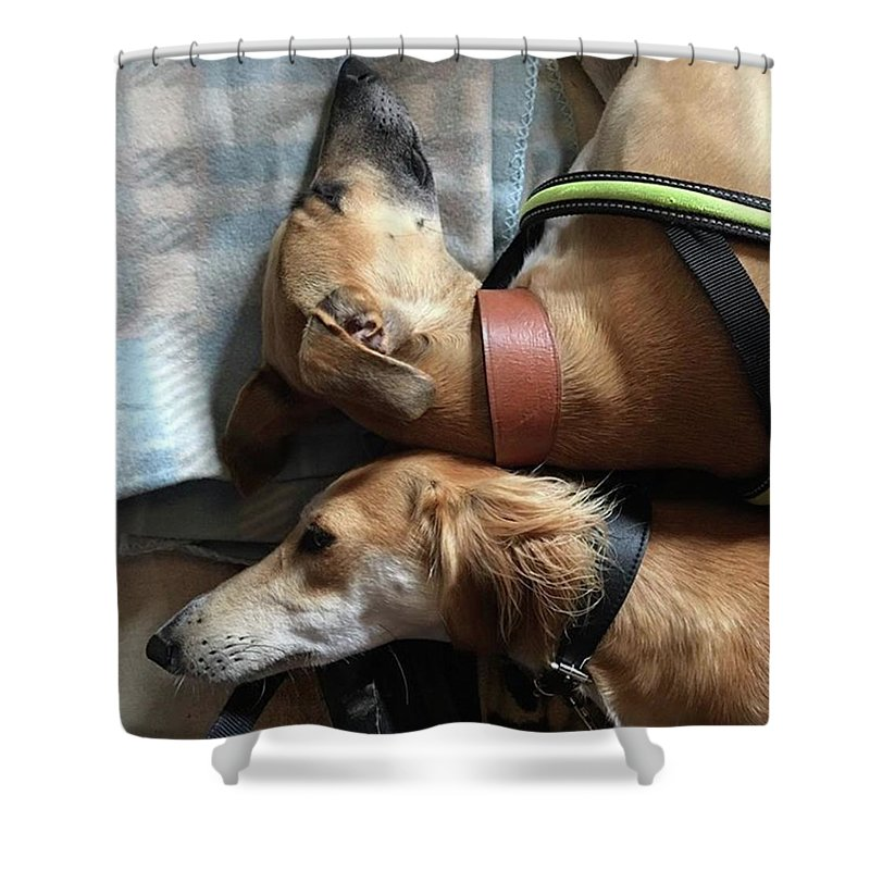 Persiangreyhound Shower Curtain featuring the photograph Back 2 Back - Ava And Finly Relaxing At by John Edwards