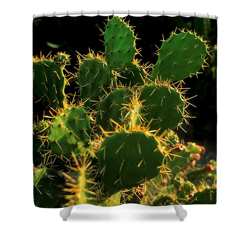 Cactus Shower Curtain featuring the photograph Backlit Cacti by Jerry McElroy