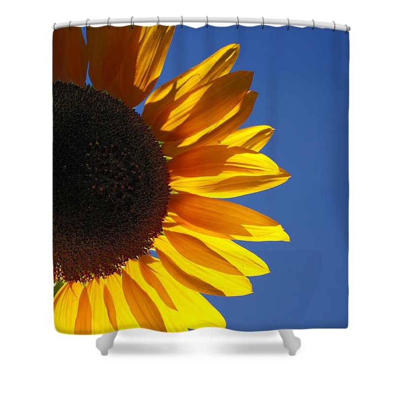 Back Light Shower Curtain featuring the photograph Backlit Sunflower by Gaspar Avila