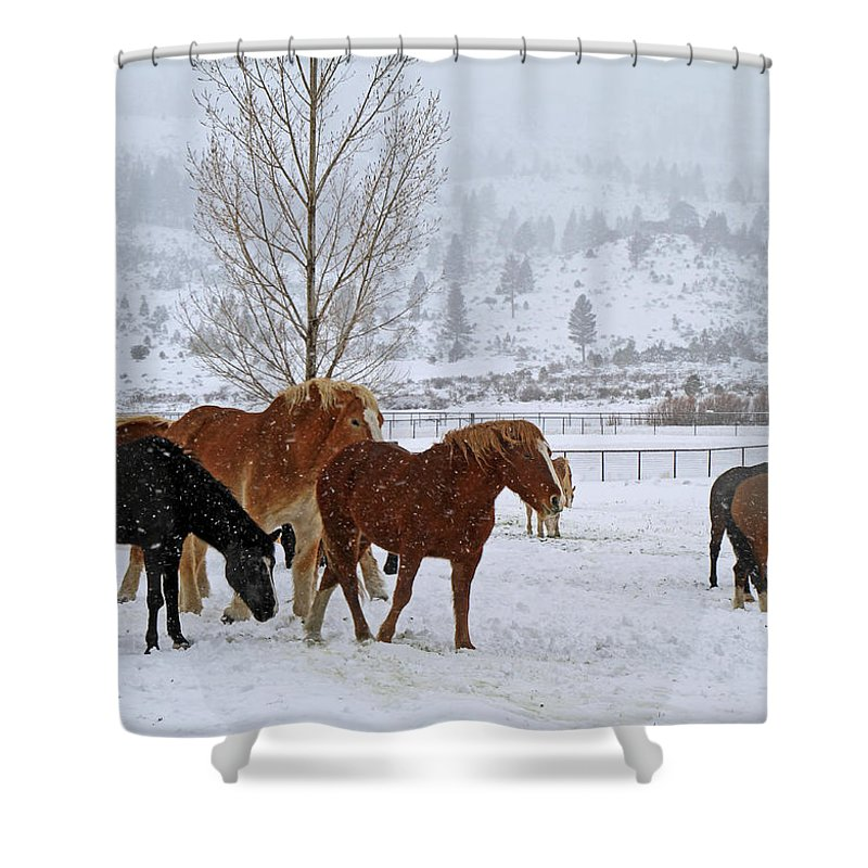 Horses Shower Curtain featuring the photograph Backs To The Wind by Donna Kennedy