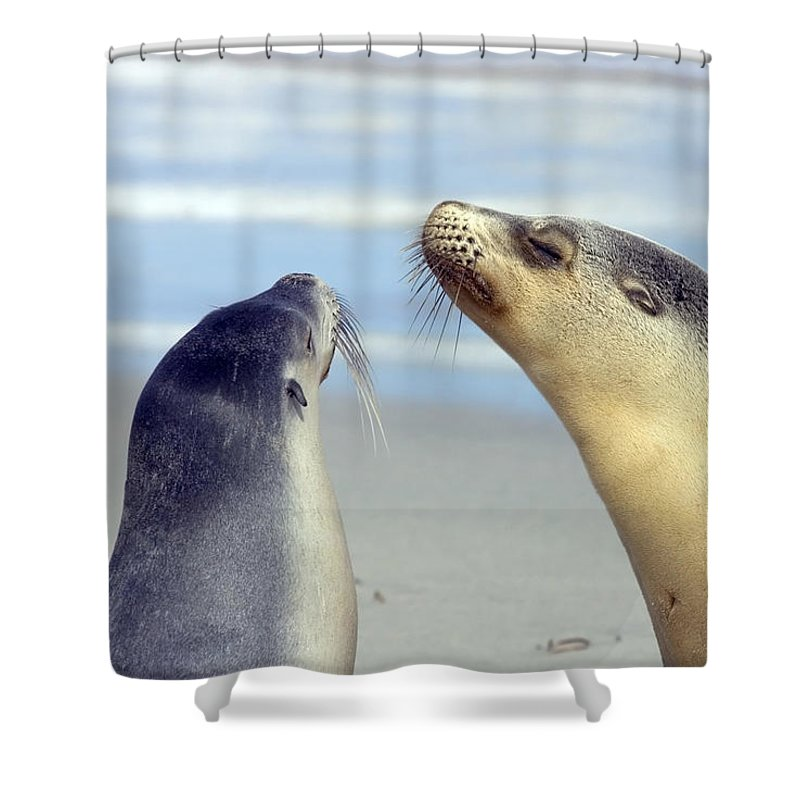 Sea Lion Shower Curtain featuring the photograph Backtalk by Mike Dawson