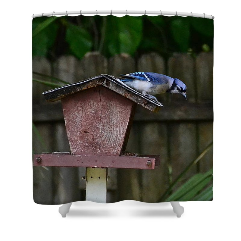 Bird Shower Curtain featuring the photograph Backyard Blue Jay by Carol Bradley