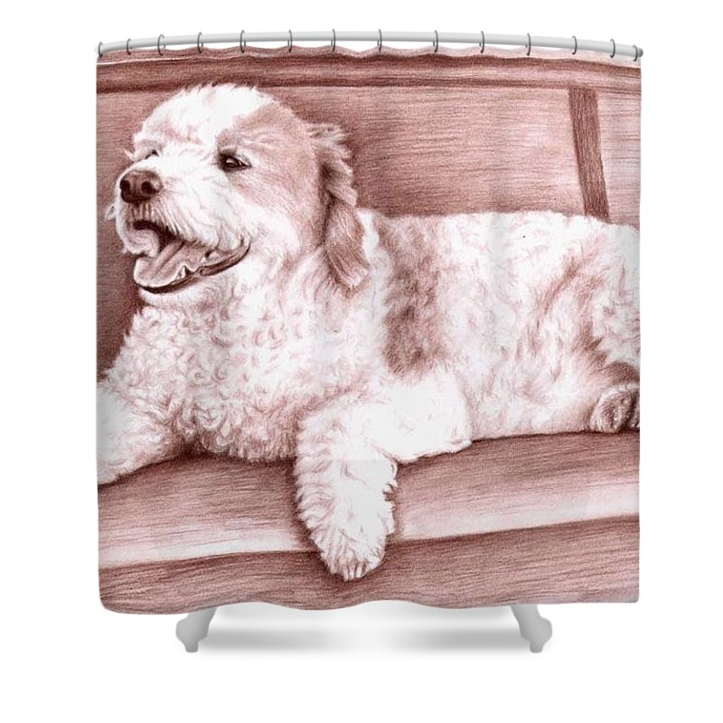Dog Shower Curtain featuring the drawing Baco by Nicole Zeug