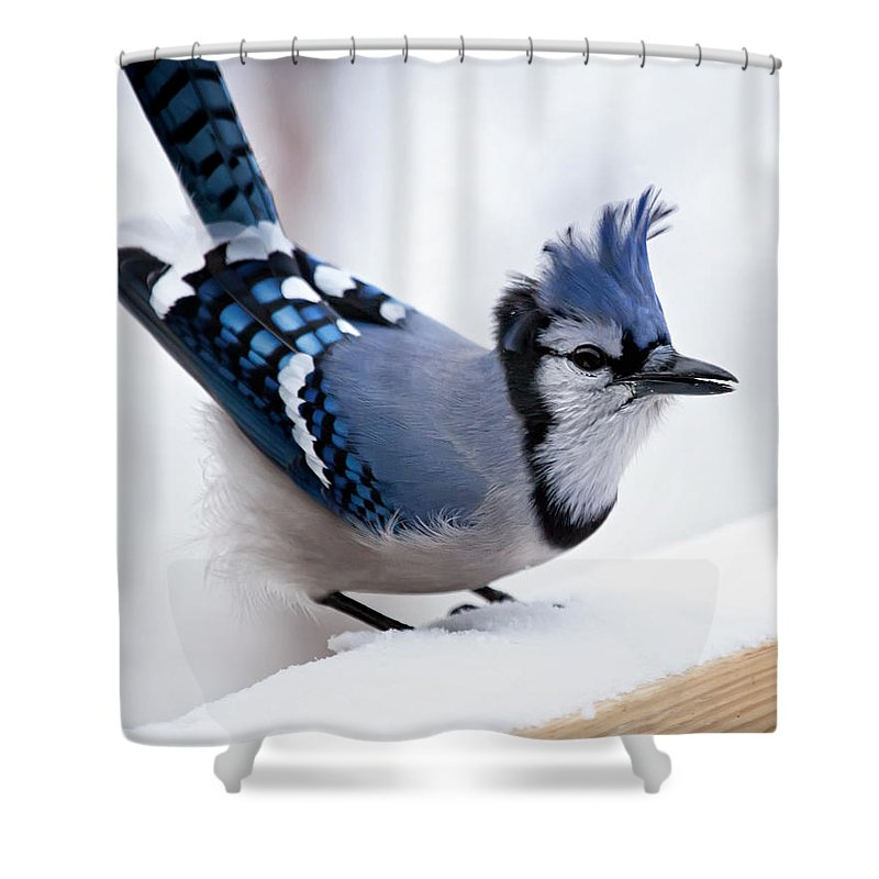 blue Jay' Shower Curtain featuring the photograph Bad Feather Day by Al Mueller