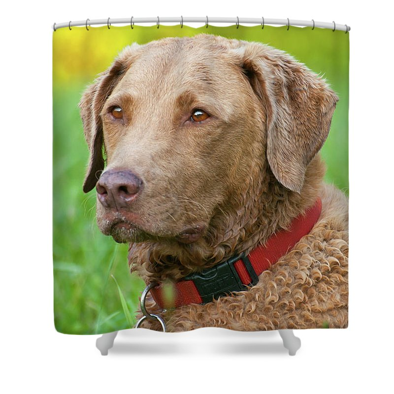 Animals Shower Curtain featuring the photograph Bailee 1149 by Guy Whiteley