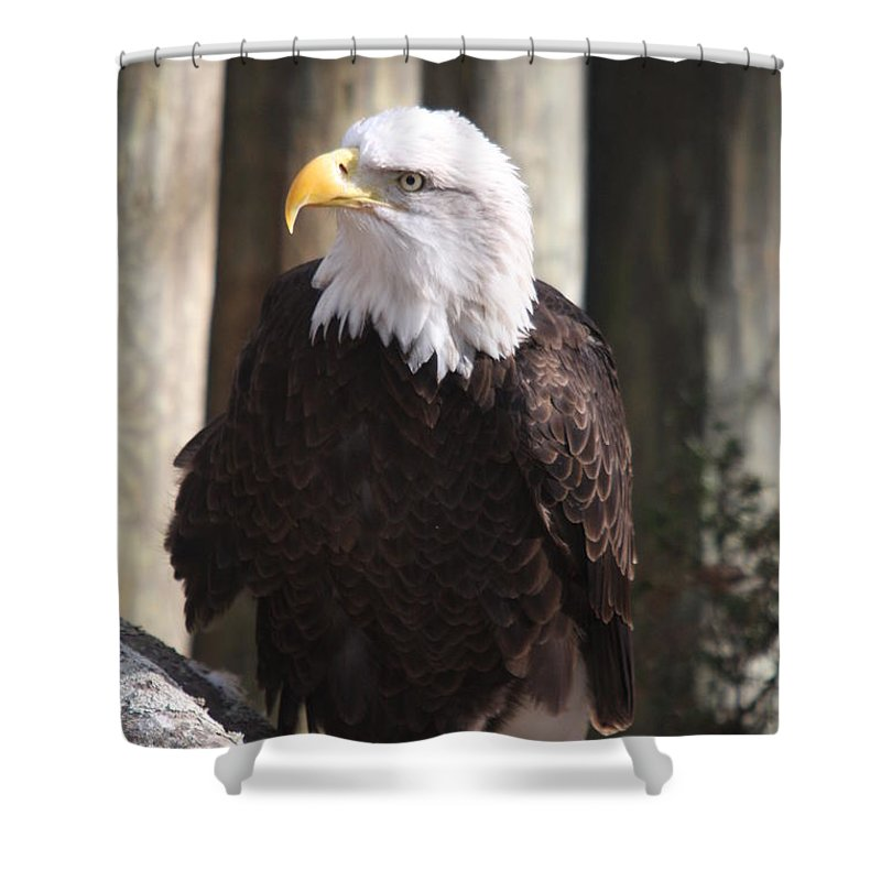 Eagle Shower Curtain featuring the photograph Bald Eagle by Christiane Schulze Art And Photography