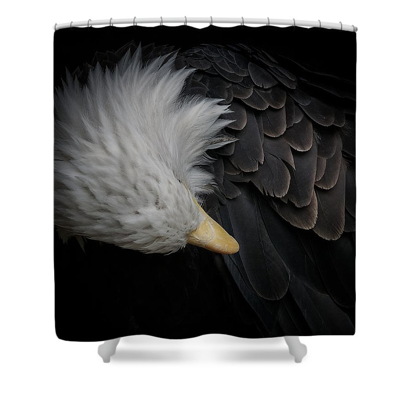 Animal Shower Curtain featuring the photograph Bald Eagle Cleaning by Ernie Echols