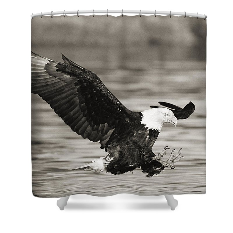 Air Art Shower Curtain featuring the photograph Bald Eagle Landing by John Hyde - Printscapes