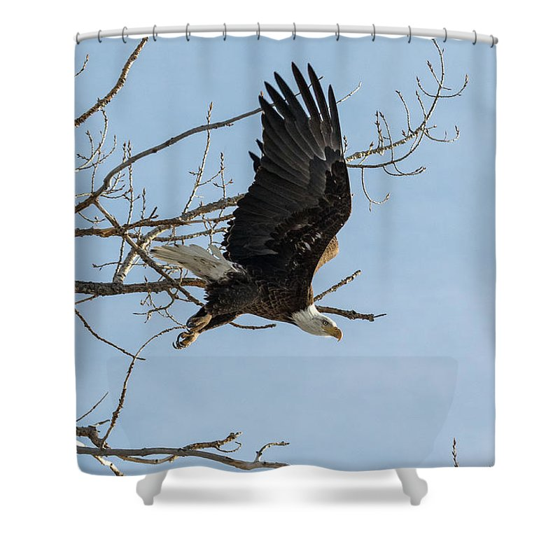 Bald Eagle Shower Curtain featuring the photograph Bald Eagle Makes An Aggressive Dive by Tony Hake