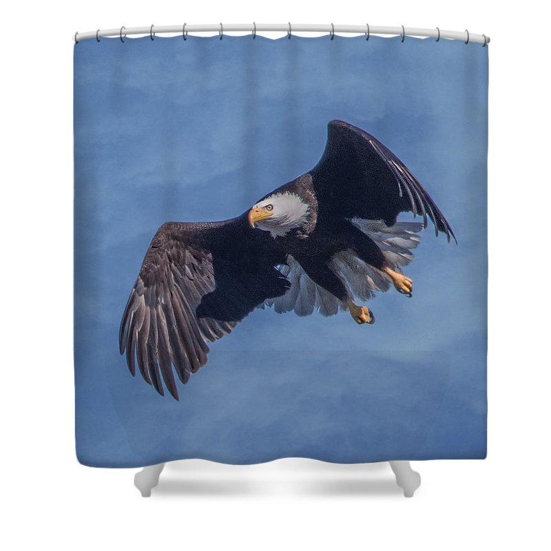 Bird Shower Curtain featuring the photograph Bald Eagle Ready For A Treat Of Interest by Leslie Reagan - Joy To The Wild Photos