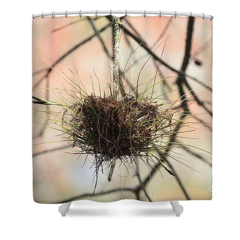 Ball Moss Shower Curtain featuring the photograph Ball Moss by Carol Groenen